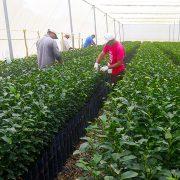 agricultura orgánica en cítricos