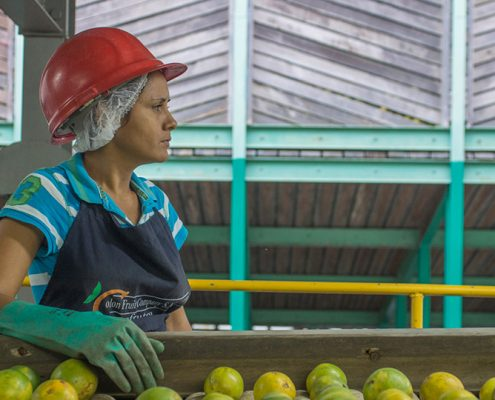 producción de naranjas en Honduras