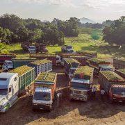 Exportar cítricos en Honduras