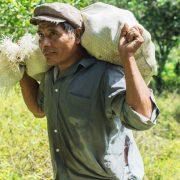 citricultores en Honduras