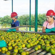 Cofructo es una empresa que apuesta por el desarrollo de la industria de Honduras