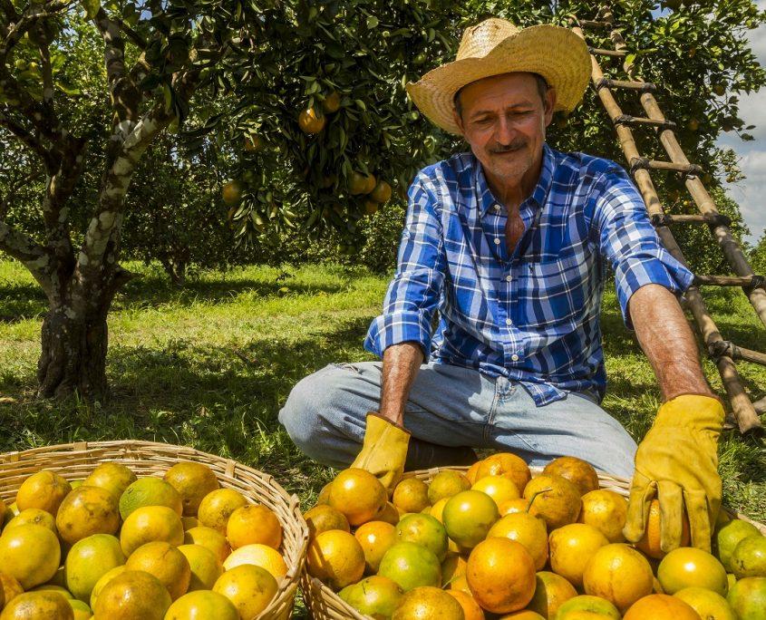 Citricultores: vida para la industria en Honduras
