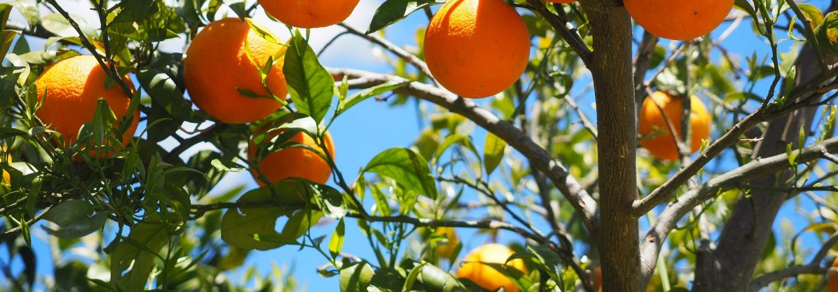 impacto ambiental de la naranja